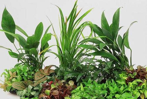 水草烂叶子怎么回事 烂叶子原因及处理方法