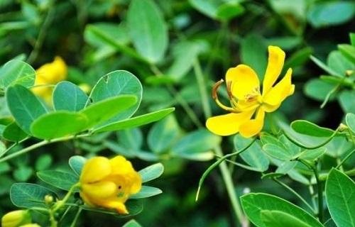 花生的花是什么颜色 长什么形状样子
