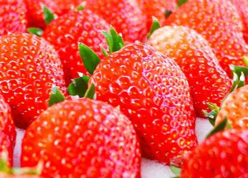 草莓怎么保存时间长