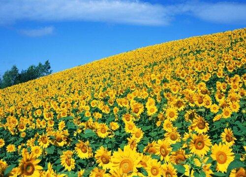 表示时间的花 花语是时间的花
