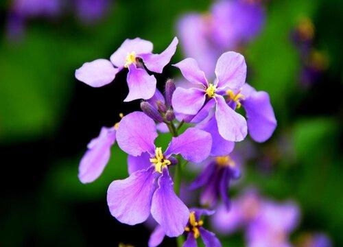 表示无私奉献的花 花语是无私奉献的花