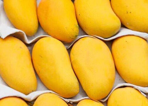 芒果可以放多久不坏