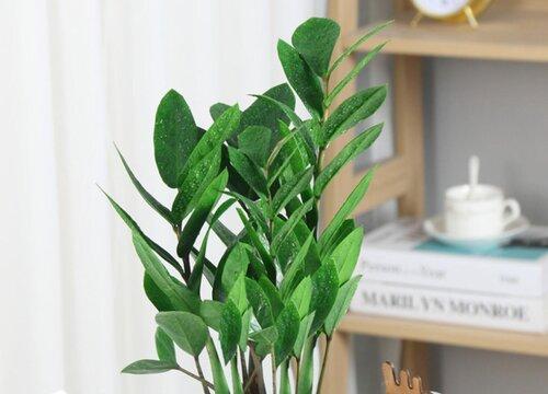 茶叶水可以浇金钱树吗