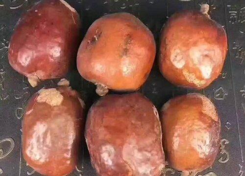 佛心果是什么植物的果实