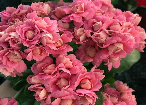 长条盆适合种什么花