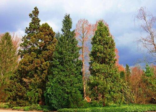 松树是单子叶植物吗
