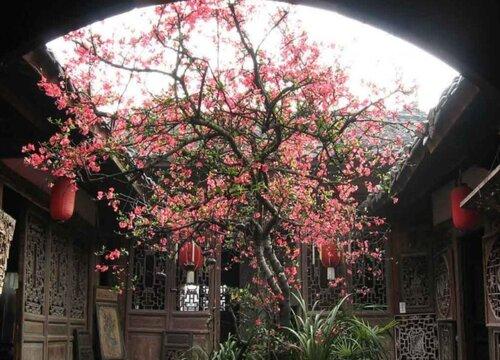 海棠树能长多大