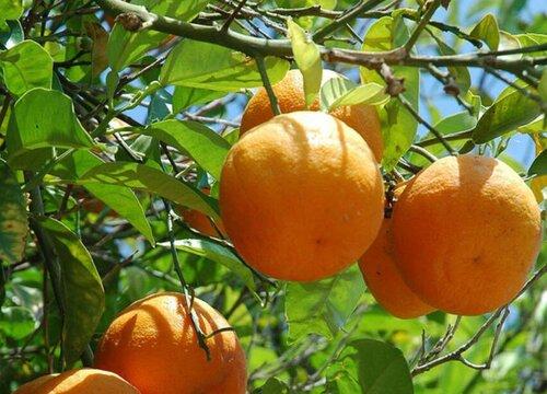 江苏适合种植什么水果