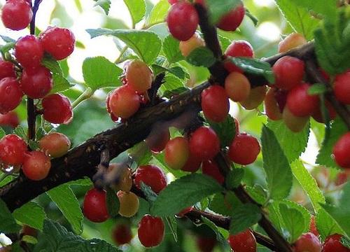浙江适合种植什么水果