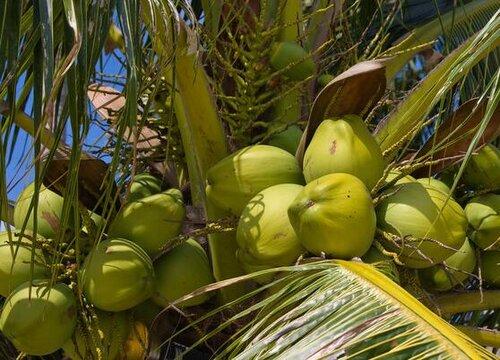 缅甸产什么水果