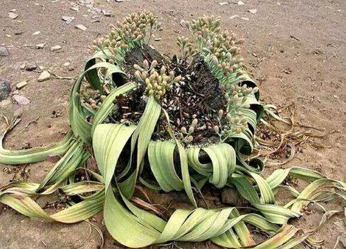 象征生命力顽强的植物有哪些