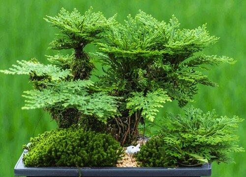 生命力顽强的植物有哪些