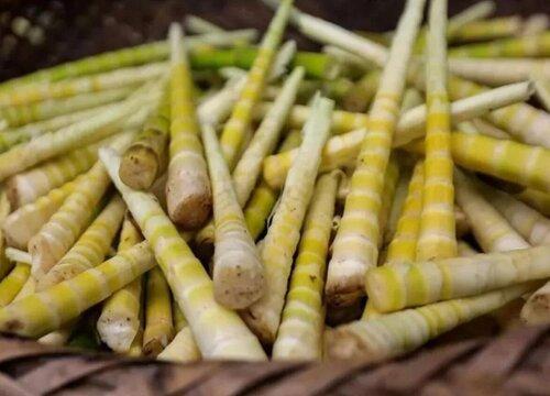 竹笋可以冷冻保存吗 长期保存鲜竹笋的办法
