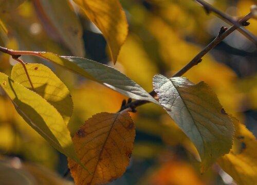 树叶长虫子怎么办