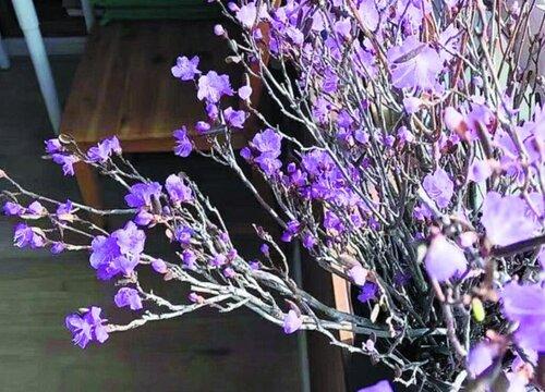 鲜花怎么做干花不褪色 如何制作干花保持颜色不变