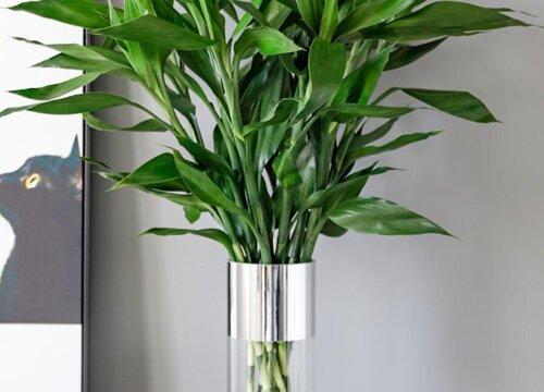竹子烂根怎么办 家养竹子根部烂了该怎么处理