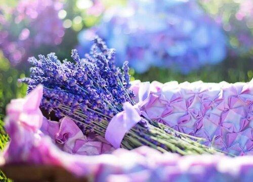 薰衣草怎么做干花 手工花制作方法与步骤