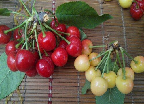 淄博水果特产介绍 山东淄博市盛产什么水果