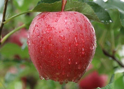 进口苹果有哪些品种 进口苹果种类及名字
