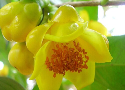 最娇贵的花是什么花 世界上5大娇贵的花卉