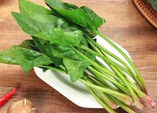 菠菜烂根是什么原因 种的菠菜烂根怎么回事