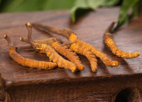 冬虫夏草有什么作用和功效 吃了有什么效果