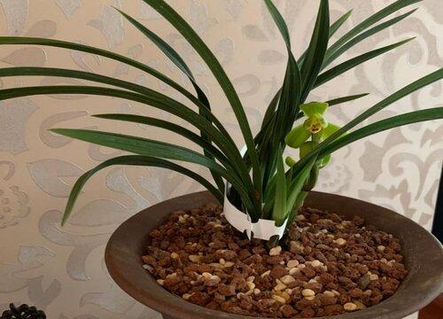 用什么种植兰花效果比较好