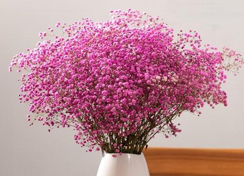 满天星怎么做干花能保持颜色 怎么插花瓶好看