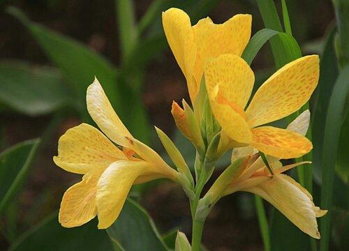 耐高温花卉有哪些品种 耐热好养的花卉植物大全