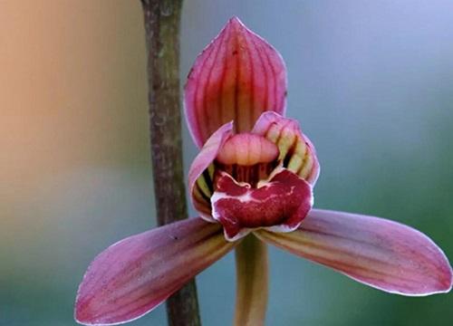 兰花叶片油绿是如何养护的