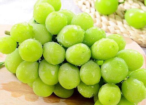 维多利亚葡萄品种介绍及特点