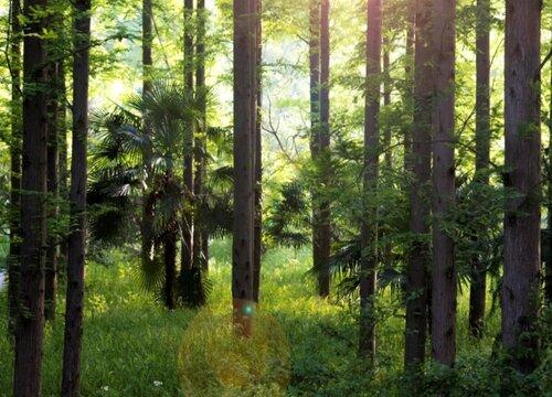 水杉的生长周期是多长时间