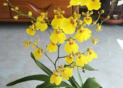 勤花兰花有哪些品种 开花最勤的兰花品种