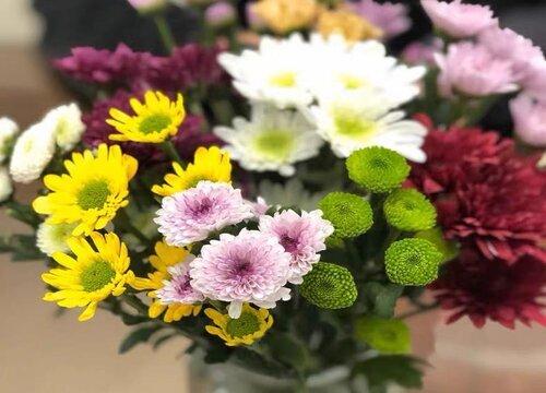 小雏菊播种后多久开花 种子一般多久发芽
