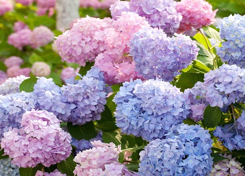 朝北阳台适合种什么花 北阳台种什么花卉植物好