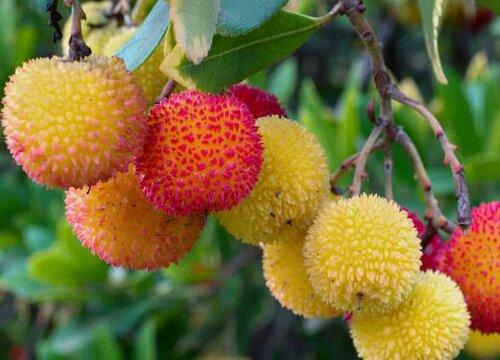 杨梅树什么时候栽最好 哪个季节栽种杨梅树最好