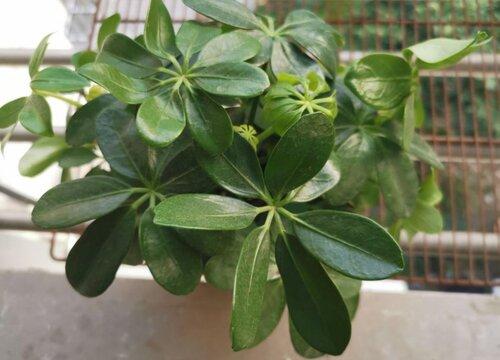 碳元素对植物的作用及功能 碳在植物生长中的作